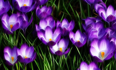 Photograph - Captivating Crocuses by Cameron Wood
