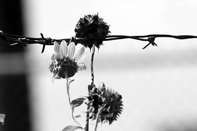 Photograph - Captive by Elizabeth Hart