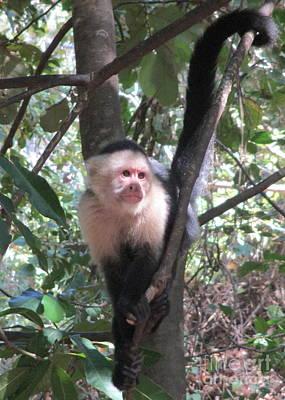Photograph - Capuchin Monkey 4 by Randall Weidner