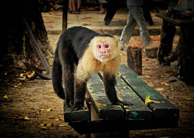 Photograph - Capuchin Monkey Looking For A Handout by Carolyn Derstine