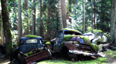 Car Lot In The Forest Art Print by Diane Smith