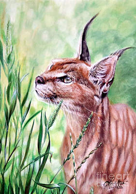 Painting - Caracal by Lachri