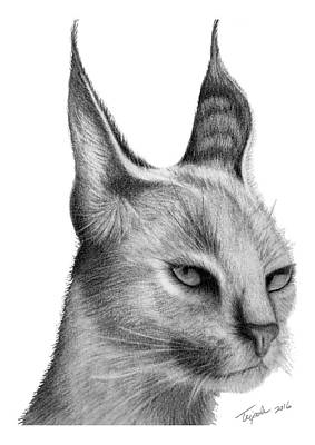 Drawing - Caracal by Lawrence Tripoli