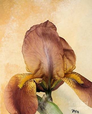 Mixed Media - Caramel Iris by Marsha Heiken