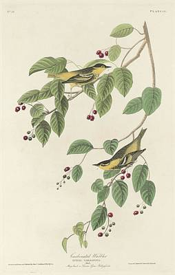 Wings Drawing - Carbonated Warbling by Dreyer Wildlife Print Collections