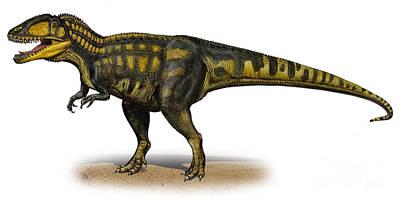 Animals Digital Art - Carcharodontosaurus Iguidensis by Sergey Krasovskiy