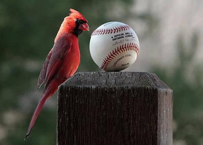 Photograph - Cardinal Baseball by John Freidenberg