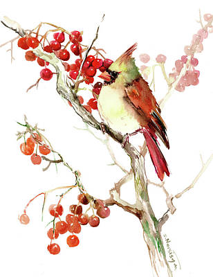 Cardinal Bird And Berries Art Print