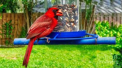 Photograph - Cardinal Bird by Larry Mulvehill