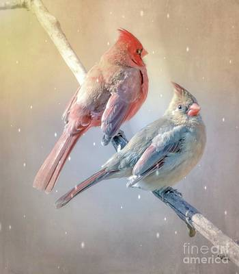 Photograph - Cardinal Birds Romance For Ever by Peggy Franz