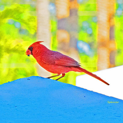 Photograph - Cardinal Blue by T Guy Spencer