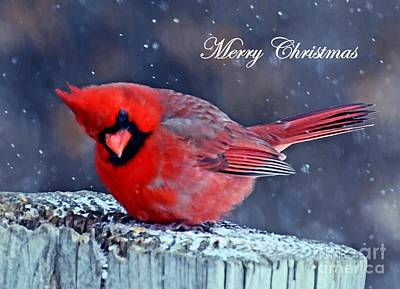 Mixed Media - Cardinal Christmas Card by Sara Raber