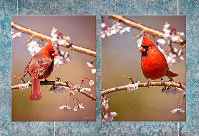 Art Print featuring the photograph Cardinal Collage by Angel Cher