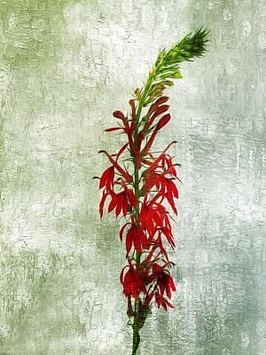 Photograph - Cardinal Flower by Joe Duket