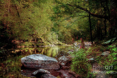 River Scenes Photograph - Cardinal Flowers Along The Stream by Mike Eingle