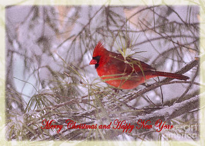 Photograph - Cardinal Greetings by Rima Biswas