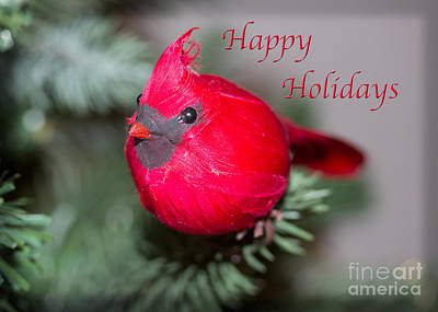 Photograph - Cardinal Happy Holidays by Dawn Gari