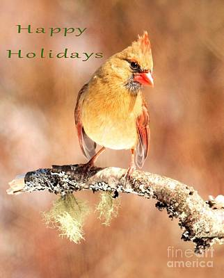 Photograph - Cardinal Happy Holidays by Debbie Stahre