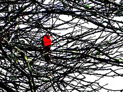 Photograph - Cardinal In A Plum Tree by Tim Townsend
