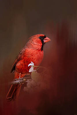 Birds With Flowers Photograph - Cardinal In Antique Red by Jai Johnson