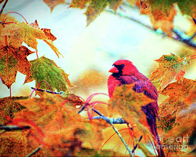 Photograph - Cardinal In Autumn by Kerri Farley
