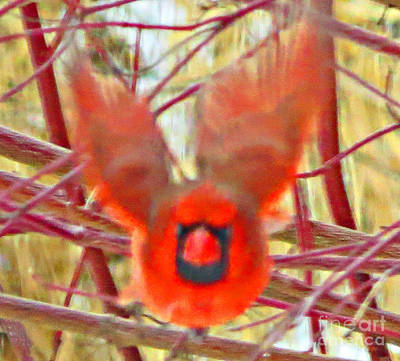 Red Bird Photograph - Cardinal In Flight Abstract by Stephanie Forrer-Harbridge