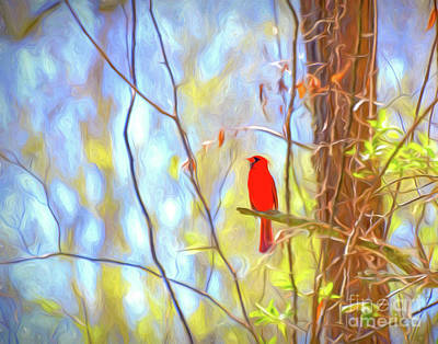 Photograph - Cardinal In The Forest by Kerri Farley