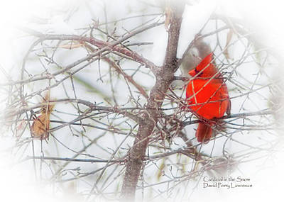Photograph - Cardinal In The Snow by David Perry Lawrence