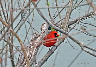 Photograph - Cardinal by Kay Lovingood