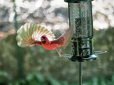 Photograph - Cardinal Launch by C H Apperson