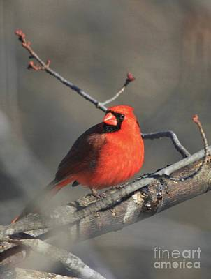 Chemical Glassware - Cardinal by Lowell Stevens