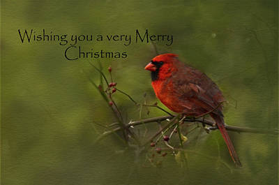 Photograph - Cardinal Merry Chrsistmas by Ann Bridges
