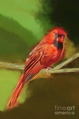 Photograph - Smoky Cardinal by Kay Brewer