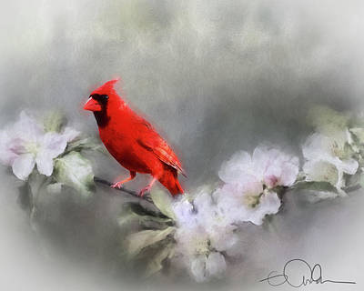 Digital Art - Cardinal On A Branch by Gloria Anderson