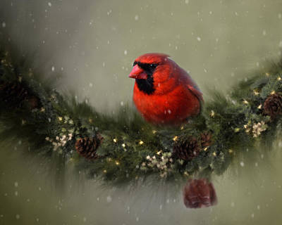 Christmas Cards Digital Art - Cardinal On Garland by Ann Bridges