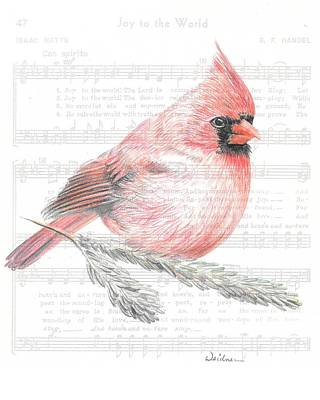 Drawing - Cardinal On Joy To The World by Kathy Weidner