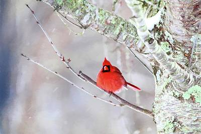 Photograph - Cardinal Painting by Carol Montoya