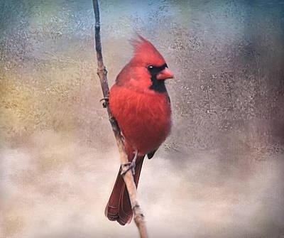 Photograph - Cardinal Peace by Bernadette Chiaramonte