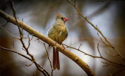 Photograph - Cardinal Rule by Ray Congrove