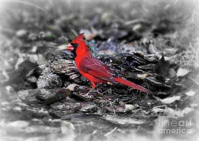 Photograph - Cardinal Standout by Carol Groenen