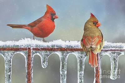 Cardinals And Icicles Art Print