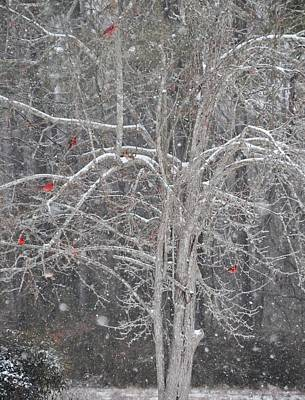 Photograph - Cardinals In Tree by Sue McGlothlin