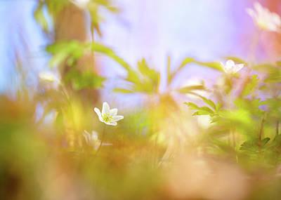 Photograph - Carefree Spring by Sarah-fiona Helme