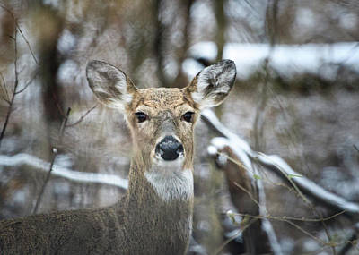 Photograph - Careful, Deer by Joni Eskridge