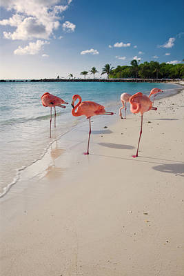Aruba Photograph - Caribbean Beach With Pink Flamingos by George Oze