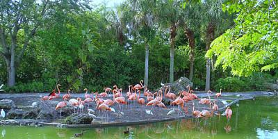 Caribbean Flamingos Art Print by Tammy Chesney