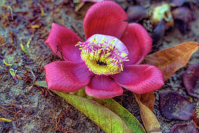 Photograph - Caribbean Flower 1 by Nadia Sanowar