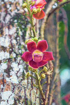 Photograph - Caribbean Flower 2 by Nadia Sanowar