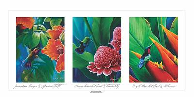 Painting - Caribbean Hummingbirds Triptych  by Christopher Cox