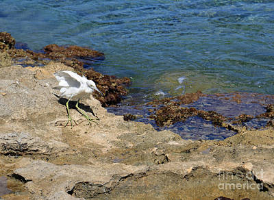 Photograph - Caribbean Seabird by Mary Haber